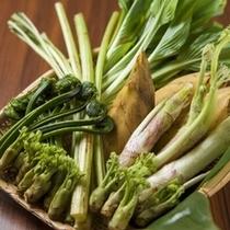 【春の味覚・山菜】天ぷらや料理で、芳しい香りと、山の味が愉しめ、春の訪れを感じされます。
