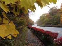 清里駅に続く秋の道