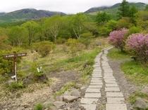 美し森ファームへの散歩道つつじの咲く頃6月初旬