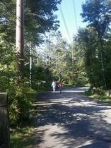森の散歩はどこまでも
