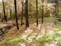 秋の庭もカラフルに染まる、部屋から眺めてパチリ!