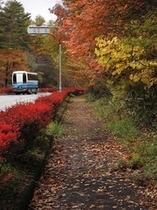 美し森へ向かう道の紅葉