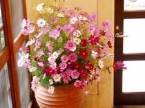 玄関(部分)のコスモス、大好きな花です。