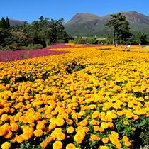 【くじゅう花公園】四季折々のお花がお愉しみいただけます。