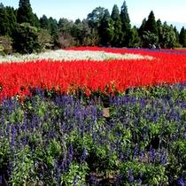 【くじゅう花公園】当館より車で約25分★四季折々のお花がお愉しみいただけます。