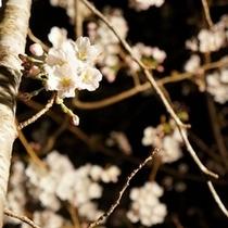 テラスからも桜が!