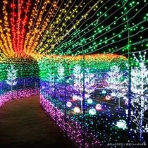 *【グランイルミ@伊豆グランパル公園(当館からお車で2分)詰められたLEDが美しく光り輝いています☆