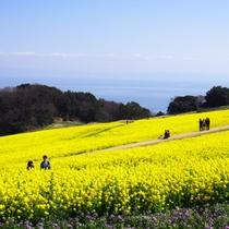 【あわじ花さじき】~春~菜の花畑(ホテルよりお車で約50分・無料)