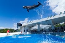 【海きらら】イルカのキャッチボール