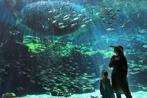 【海きらら】お魚の水槽