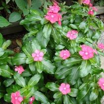 *中庭の花