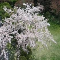 自慢の歴史ある庭園【4月〜桜】