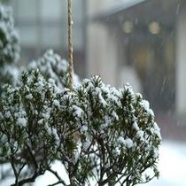 自慢の歴史ある庭園【冬囲い】