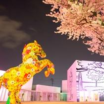 【夜桜シャトル】(春)