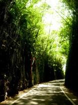 森のトンネル(臨海鉄道跡)