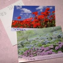 御宿 竹取物語 秩父観光名所 オリジナルポストカード