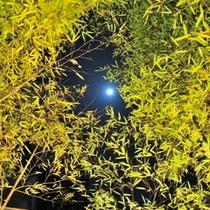 竹の合間から空を眺めたら満月が…♪