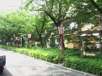 緑の通・木屋町通り