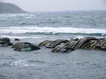 北海道南西沖地震の際壊れたトンネルの残骸