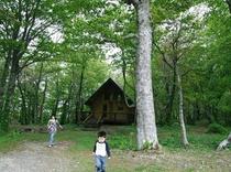 復興の森の散策!フワフワの天然ジュータンに驚くわよ