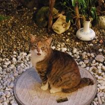 外ネコちゃん。よくお風呂で見張りをしています♪