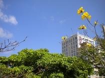 冬の沖縄は少し日差しも柔らかです
