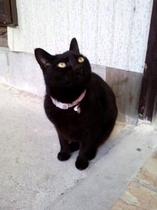 諏訪温泉の看板ネコ ミーちゃん♪