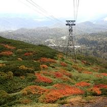 【旭岳(秋)】ロープウェイからの紅葉の景色必見です。