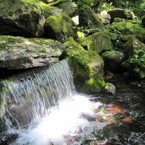 【大雪旭岳源水】大雪山の自然が創りあげた銘水といわれる良質なミネラル水。