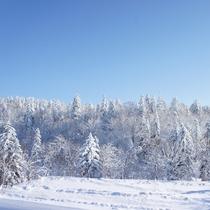【雪景色(冬)】木々にも雪が積もり、辺り一面が銀世界に包まれます。