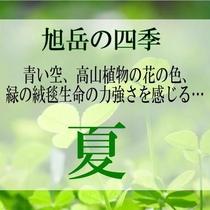 【旭岳の四季】夏