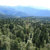 【ロープウェーからの景色(夏)】青々と茂る木々の風景は、自然と気分を和ませます。