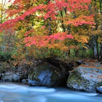 【紅葉(秋)】紅葉の名所として知られる天人峡。シーズンには多くのカメラマンたちが集います。