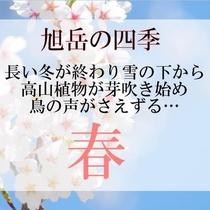 【旭岳の四季】春