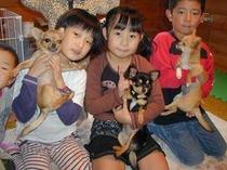 子供たちとチワワ