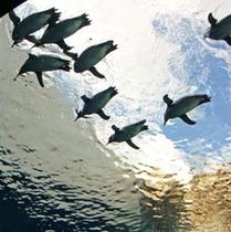 アクアス 空飛ぶペンギン?