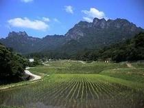 「妙義山と棚田」画像提供:富岡市 ※妙義山までは当宿からお車で約20分