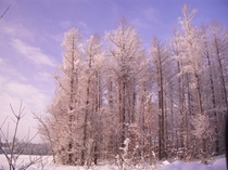 敷地内の冬の風景です。