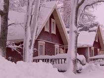 真冬の知床はアラスカのようです。吹雪の後。