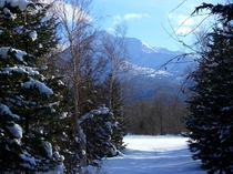 スノーシューで行く森の小路