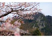 【梅花とひびき渓谷】