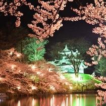 *高田城の夜桜