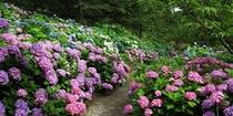 花野辺の里◆3万坪もの広大な敷地の中には四季折々の花木や草花が咲き誇っている自然庭園。