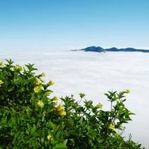 【夏】黒岳雲海