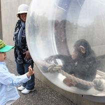 【旭山動物園】チンパンジー館(外)