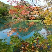 *紅葉の時期は赤と緑のコントラストが美しいドッコ沼。例年10月中旬~下旬が見頃です。