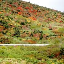 *紅葉の時期はカラフルな木々がお出迎え。お釜へ観光の途中に素敵な景観も見れるからお得!