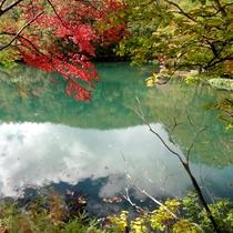 *沼底の湧水により、枯れることのないドッコ沼。沼のエメラルドグリーンに紅葉がよく映えます。