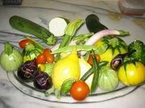 自家菜園の野菜