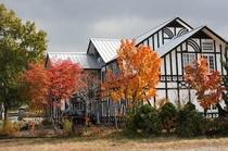 秋のホワイトウイングの裏庭